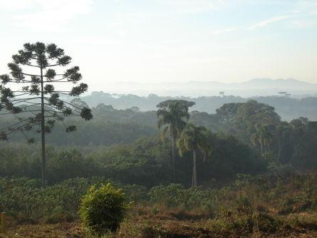 Colônia Marcelino neblina