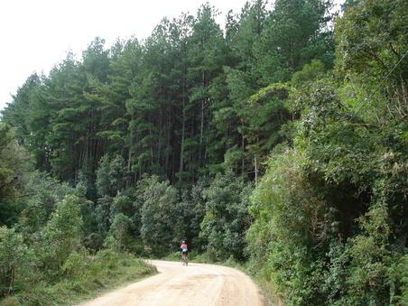 Floresta de pinus Guaricana chaminé castelhanos