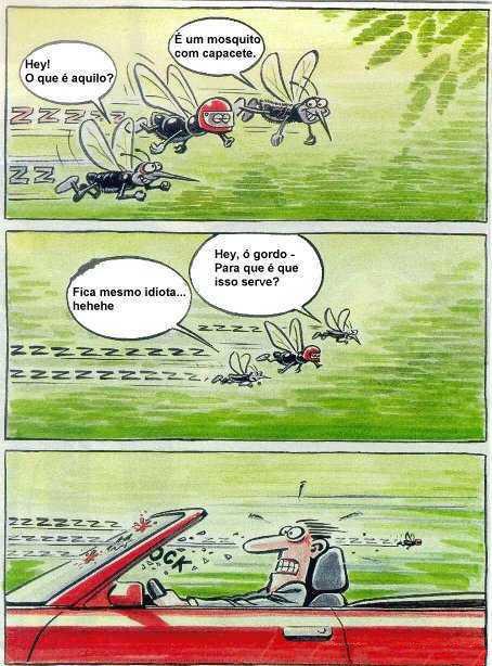Mosquito esperto!