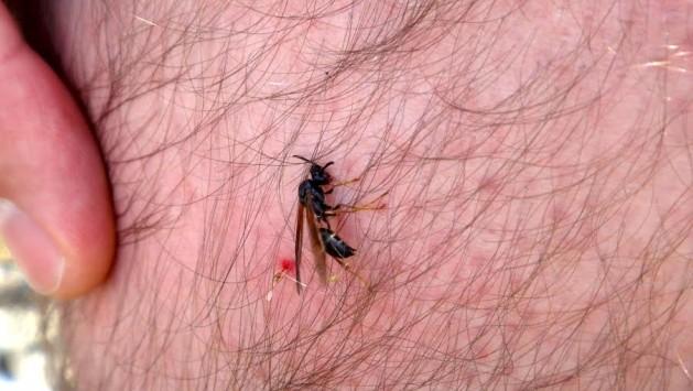 Morro da Cruz, vespa e ferrão